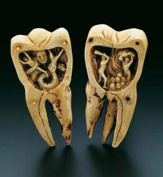 _toothworm