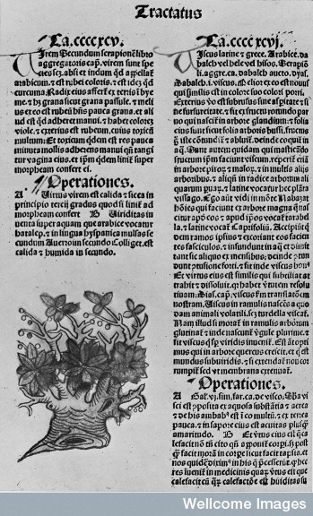 M0008872 The oldest printed description and picture of the mistletoe.