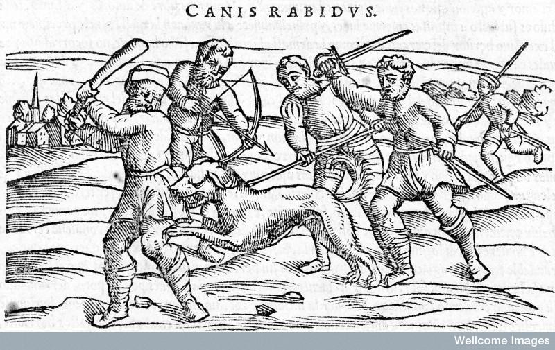 L0009996 Rabies: Slaying a mad dog